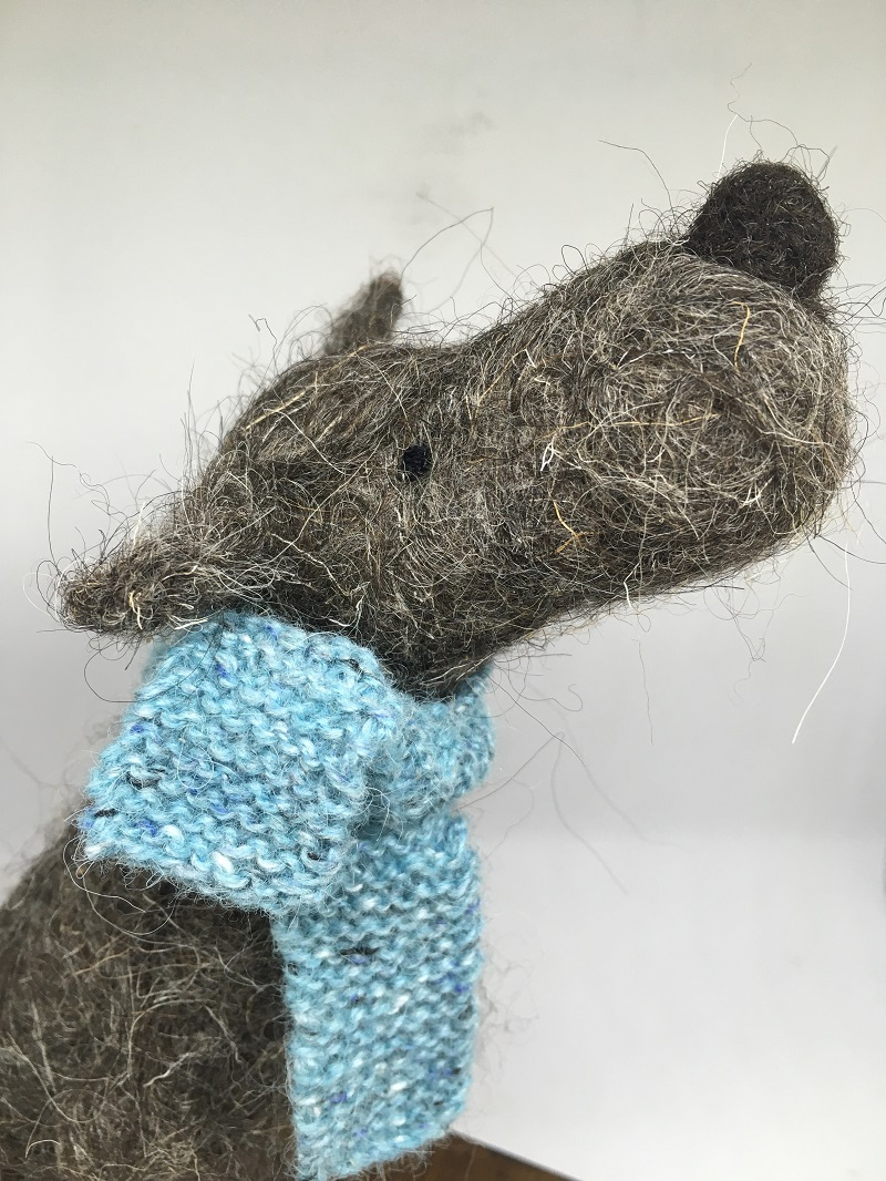 Dark Grey dog with blue scarf