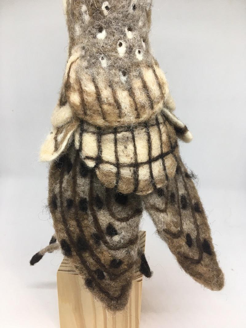 Detail owl 3 2020